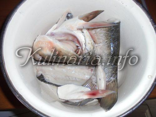 рыба толлстолоб